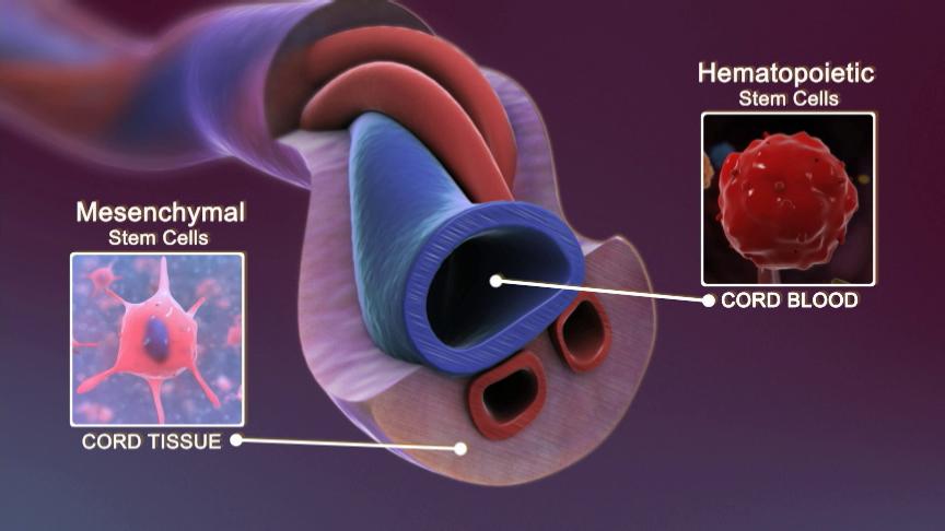 Cord Blood Banking Cost >> Umbilical Cord Stem Cells - Advanced Rejuvenation